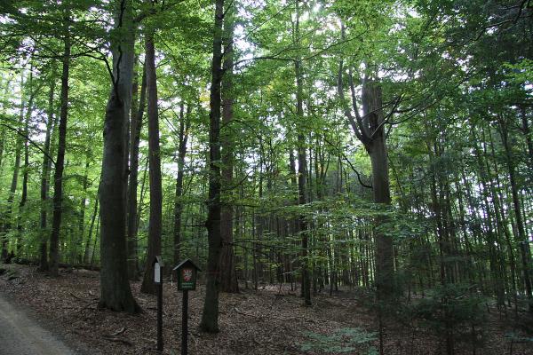 Fotografie k Sobědražský prales