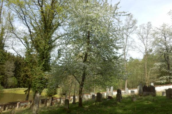 Fotografie k Židovský hřbitov u Zběšiček