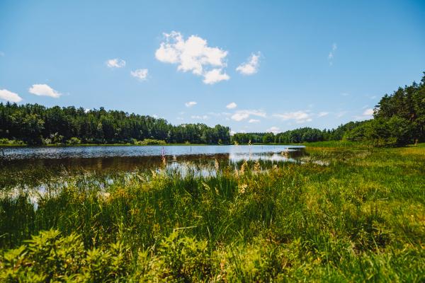 Fotografie k Líšnický rybník u Milevska (Pytlák)